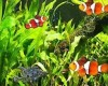 фото  Fish Aquarium Screensaver  1.0