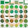 Artisans Gardens Landscape Design Symbols in Plan View color  - Best-soft.ru