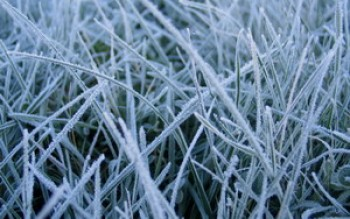 скриншот Frosted Grass